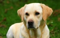 Oscar, il cane mangia palline
