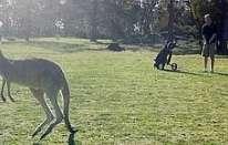 Le insidie del golf
