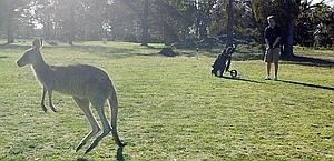 Foto: Insidie Golf