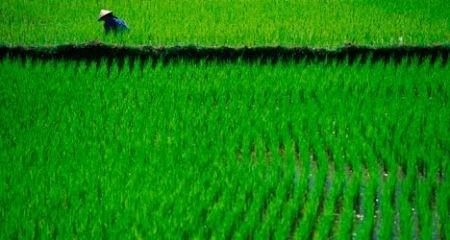 Foto: Vietnam Golf