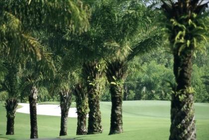 Vietnam Golf palme